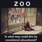 Como es que esto puede ser considerado educacional?? Basta de zoológicos! http://t.co/NpzTjwg0qv