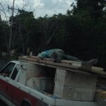RT @JeAnJiBe: La seguridad antes q nada @Trafico_ZMG !!!! http://t.co/bhRiKQcPFs
