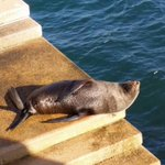 A close up photo of the #VIPSeal on the steps at @SydOperaHouse Via @ORRCA_Inc http://t.co/d3H5ndWNyB