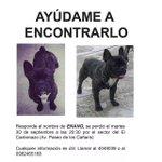 RT @JuanPablo_Farez: El Enano se perdió por el Sector de El Carbonazo Ayudennos a Encontrarlo. @super949 @eltiempocuenca @tomebamba http://t.co/QIheoXZ26R