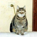 RT @crazy_kutas: Кот на зарядке. http://t.co/xV1P8wliRU