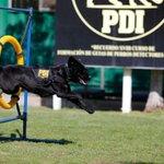 """RT @PublimetroChile: Aww! """"Una mascota, una responsabilidad"""" la campaña que impulsó la PDI http://t.co/DztiObPZM6 http://t.co/m0poBzIpf4"""