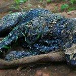 RT @PublimetroChile: Escalofriante: Así rescataron a un perro que fue momificado vivo http://t.co/SeaP2zkUVW http://t.co/cjEYL8P01T