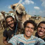 All other selfies have been subsequently canceled due to this badass camel selfie from Giza (Photo: Hossam Atef) http://t.co/MIrJhIMckn