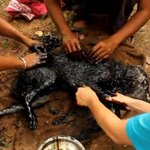 RT @24HorasTVN: Rescatan a perro antes de que asfalto se solidificara sobre su cuerpo. La historia y FOTOS → http://t.co/onkeCLjEQf http://t.co/nZxD9fCYKc