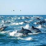 RT @webcamsdemexico: ¡Espectacular! Esto es lo que puedes ver en el mar de Cortés #SanCarlos #Sonora. Vía @pqalmada: http://t.co/N3nQAd4GfM