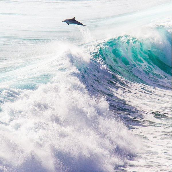 Meanwhile in the @MargaretRiverAu region, the local dolphins love to put on a good show! Photo: @TourMargaretRvr http://t.co/rOl1bn150o
