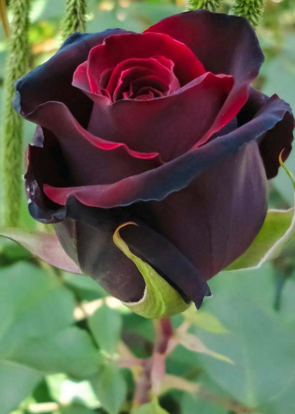 """nice """"@gede_prama: Heart is rose, love is fragrance http://t.co/vhs0zWyY4M http://t.co/sz0hKeSvoh"""""""