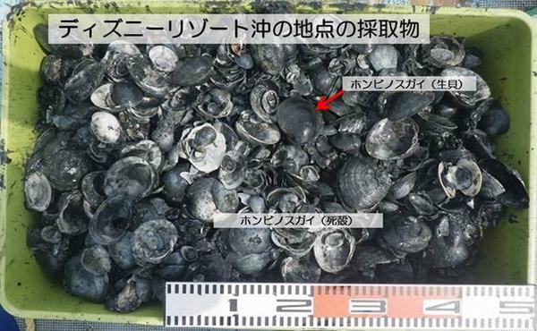 【成魚調査速報】9月の調査では、東京港周辺の調査地点4ヶ所すべてで、魚類が確認されませんでした。また、海底近くの酸素はほとんどありませんでした。(水環境担当)http://t.co/owgulWlg3s http://t.co/VPRqRaaOg0