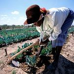 The Zimbabwe Farmers Union to launch 5-year strategic plan for horticulture via @BH24Zim http://t.co/d76lUhK3Z2 http://t.co/bJ8ntFEw5g