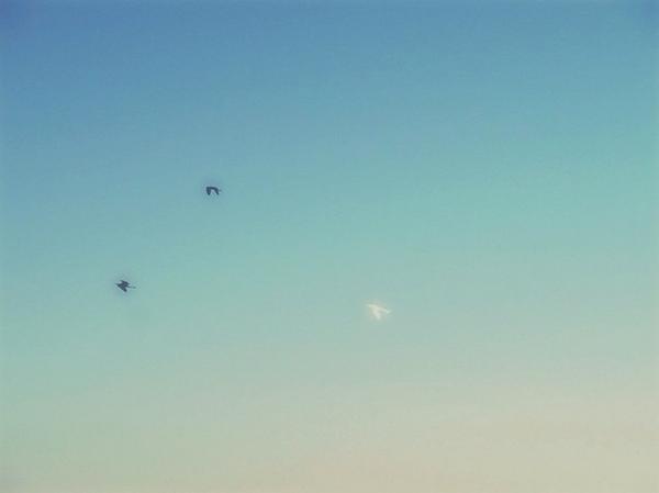【photo】9、12、5。あの三羽は、あの三人。この写真が撮れたとき感動した。たとえビニール袋だったとしても。いつかの
