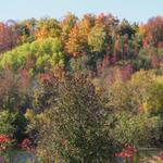 RT @NaturesYear: Along the trails @TrentUniversity Easy access to great local nature @PboroExaminer http://t.co/tfUWk43cI2 http://t.co/zkTIcwszVe