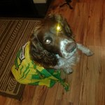 The Donegal Weather channel dog says paws up for Donegal. Whats that coming over the hill WOOF WOOF its @murphm95 http://t.co/469ajXFjSz