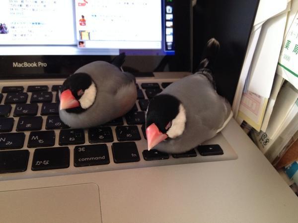 熟睡してるからキーボード打てない…。 #buncho http://t.co/LrZukBUtLM
