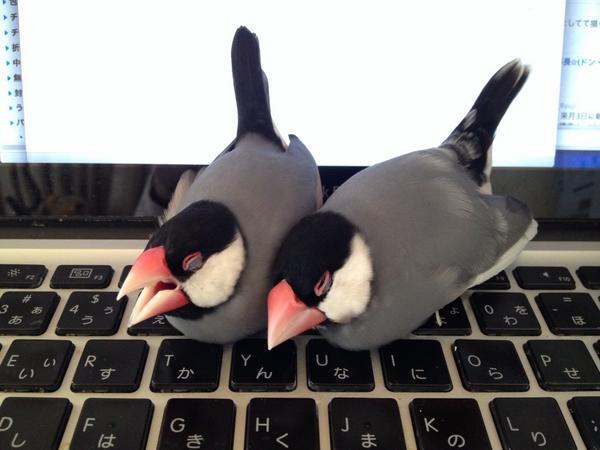 キーボードの上が暑いならどいてください…。 #buncho http://t.co/knZeSPePNl