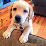 RT @9GAG: I forgot to feed the dog... http://t.co/ppPXiKb0vt http://t.co/nWz460ClXz