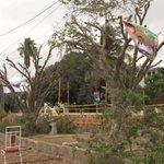 RT @SAMAATV: Video: Trees destroyed for 'Tsunami' http://t.co/kS8pOBINS0 #Karachi #PTI http://t.co/ImAPCv1IVK