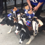 RT @Lana: replace the entire team with monkeys on dogs. replace all teams with monkeys on dogs. https://t.co/V99iX7RdTN