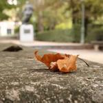 RT @RJBOTANICO: ¿Preparados para disfrutar del otoño? ¡Solo quedan dos días! http://t.co/nHnMv1BqbL