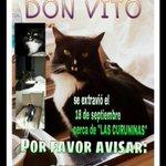 RT @primoya: Se perdió el gato de una amiga en La Serena RT x favor @elobservatodo @AlmacenSilvana @Laserena_cl @LaSerena_Chile http://t.co/IFThFty7LI
