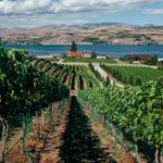 RT @nytimes: A wine region flourishes in central Washington http://t.co/XulMmFkYKc (Photo: David Kasnic for NYT) http://t.co/Ey8amMkFFD