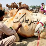 Animals being decorated and painted ahead of the Eid-ul-Azha for sacrifice #Pakistan v @ExpressNewsPK http://t.co/FW1cWKWrnc