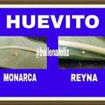 Y para mi lo mas importante PUSO HUEVITOS vean la diferencia #Monterrey #Michoacan #EdoMex #Tamaulipas #Coahuila http://t.co/VBSMIMt0jR