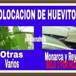 Esto es muy importante #Monterrey #EdoMex #Michoacan #tamaulipas #coahuila NO FUMIGUEN SUS PLANTAS o moriran http://t.co/KcrkOPcTIZ