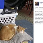 Missing cat: Seven. Last seen Friday in Huntington Hills area. Reward offered. 403-650-7450 #yyc #Calgary @nenshi http://t.co/mpVWx4Pr2v