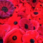 RT @BBCNottingham: You can see all the poppies from our Big Poppy Knit on display @Nottm_Contemp next month #Nottinghamshire #Nottingham http://t.co/Wt8ZRBUYcx