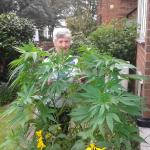 Ye right RT @itvnews Dopey gran accidentally grows weed in her garden http://t.co/ht86SXQk2f http://t.co/y6U3xTTO04