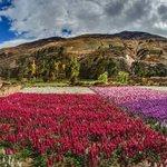 RT @RPPNoticias: ¡Esta madrugada se inició la #primavera en el #Perú! http://t.co/KTL9eTmfKX http://t.co/0EvJQCDha0