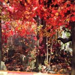 RT @ROMtoronto: Happy first day of #Fall from all of us at the Museum! Heres our reproduction of a forest in @Algonquin_PP http://t.co/gimzcxBOvi