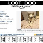 Max is missing in #sanantonio. #lost #missing #lostdog #helpmehome http://t.co/fh7XovVwUG
