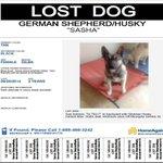 Sasha is missing in #sanantonio. #lost #missing #lostdog #helpmehome http://t.co/t80ktndh9d