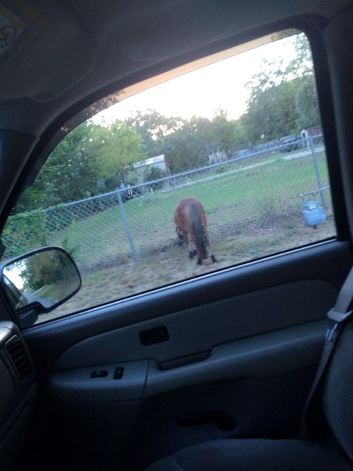 I saw a horse on the side of the road. Texas, everyone. http://t.co/L0JJwb7Qym