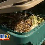 RT @KIRO7Seattle: Fines for not composting in #Seattle? Switch to KIRO 7 after #Blacklist to see why leaders say fines are the answer. http://t.co/HQo1I5ZrjK