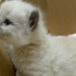 RT @HuffPostJapan: 【New!】生後50日を5分にまとめた、猫タイムラプス動画 http://t.co/YpriVeDewd http://t.co/nxnQULKDwe