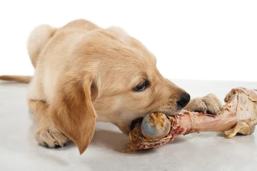 RT @itss_myworld: Thanksgiving Foods That Are Dangerous for Dogs - http://t.co/WPx14WIdUV http://t.co/suGwdhi7aJ