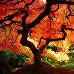 RT @IAmBirmingham: Today is the Autumnal September Equinox which means its officially the start of the #Autumn season... http://t.co/io8iB5dnBJ