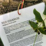 """Pic: """"Sea Change"""" artists statement, nestling behind some leaves :-) @WeekForPeace #Nottingham http://t.co/Em3EEfK2dS"""