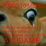 RT @sumalen59: #Algemesi un pueblo involucionado d #Valencia se divierten torturando hasta l muerte a becerros #NoAlMaltratoAnimal http://t.co/CnRppyKevr