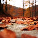 Happy first day of Autumn! What is YOUR favourite fall activity? #fall #autumn #ottawa #ottcity http://t.co/nZm8DpnidV