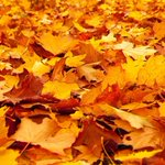 First day of #Fall! Time to shift your thinking from summer driving to winter driving, colder months are ahead. http://t.co/evQxvj2B6D