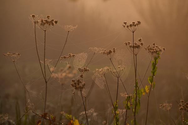 Even Spider City looked like it was covered in bling – orbs covered in pearly dew with a golden sheen. http://t.co/xIquBn9FT9
