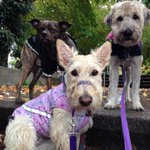 Quick photo stop! ???? Our #PuppyLove crew braving the rain on their mid-day #DogWalk today. Bundle up #Vancouver! ???? http://t.co/SnfAcplG7W