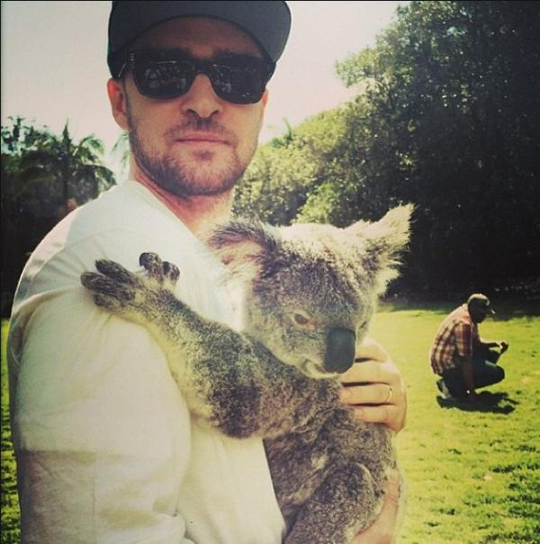 The awesome @jtimberlake came to hang out with our wildlife at #AustraliaZoo today. Thanks for visiting #JT! http://t.co/99dNQfBZ4N