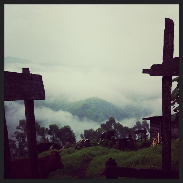 RT @loureports: Cotton wool clouds in early Masisi morning http://t.co/GMCHOsVGOA