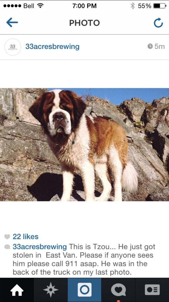 "this dog (named ""tzou"") was just stolen out of the back of @33Acres truck in east van. call 911 asap if you see him http://t.co/j7medzPWwi"