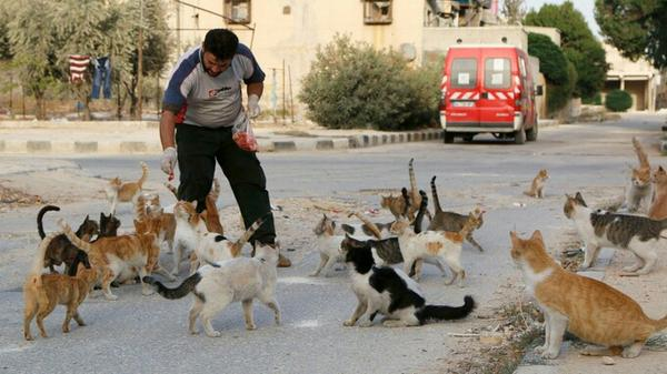 احلى حاجة شفتها النهاردة Syrian ambulance driver buys meat a& feeds around 150 cats every day http://t.co/RlCF0rBdTo http://t.co/FaHeZqNETJ